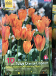 TULIPES FOSTERIANA ORANGE EMPERO  X10