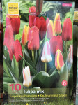 TULIPES KAUFMANNIANA MIX  X10
