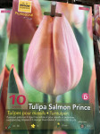 TULIPES SIMPLE SALMON PRINCE, SA  X10