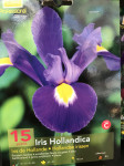 IRIS HOLLANDICA, BLEU X15