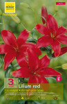 LILIUM RED,ROUGE FONCE 16/+  X3